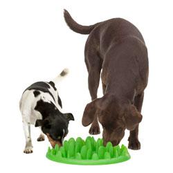 Petite mangeoire interactive pour chien bouledogue français